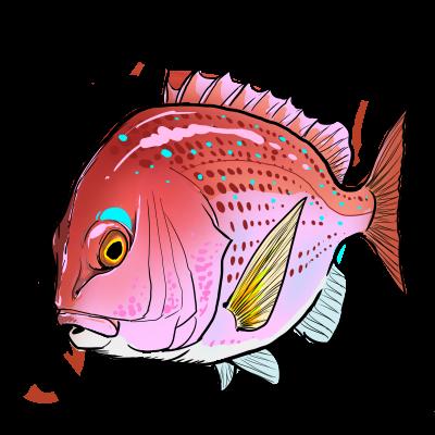 デフォルメ真鯛